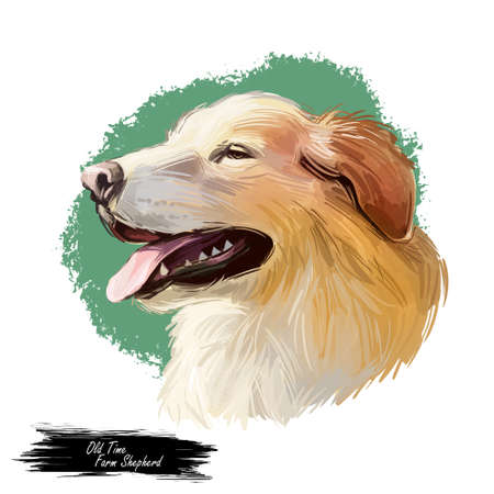 Old Time Farm Shepherd dog isolated cute canine pet. Digital art illustration of St. Bernard or St Bernard, breed of very large working dog. Profile view of puppy with open mouth and tongue.