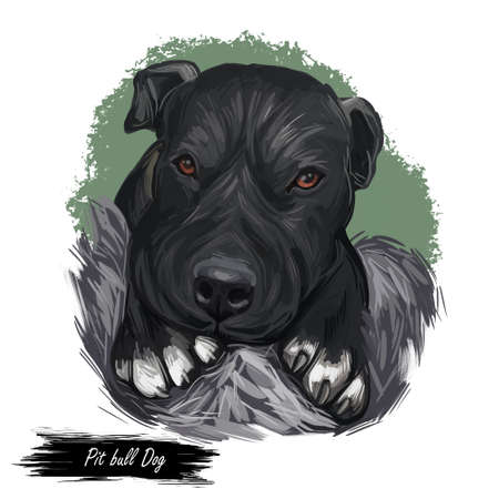 Pit bull dog descended from bulldogs and terriers isolated digital art illustration. American Pit Bull Terrier, Staffordshire Bulldog, Staffordshire Bull Terrier. Hand drawn muzzle Bully portrait. Stock fotó