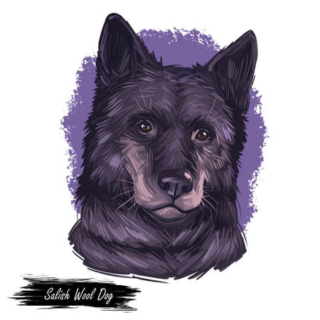 Salish wool dog isolated digital art illustration. Hand drawn dog muzzle portrait, puppy cute pet. Dog breeds originating from United States. Comox dog extinct breed of long-haired, Spitz-type dog.