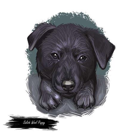 Salish wool dog isolated digital art illustration. Hand drawn dog muzzle portrait, puppy cute pet. Dog breeds originating from United States. Comox dog extinct breed of long-haired, Spitz-type dog.