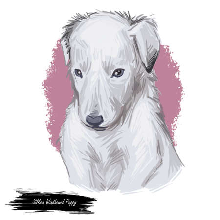 Silken windhound dog isolated digital art illustration. Hand drawn dog muzzle portrait, puppy cute pet. Dog breeds from United States. Silken Windhound American breed of sighthound, noted coursers.