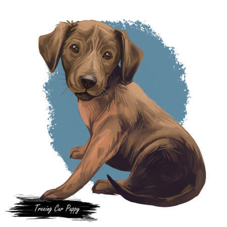 Treeing cur dog isolated digital art illustration. Hand drawn dog muzzle portrait, puppy cute pet. Dog breeds originating from United States. Treeing curs medium-sized dog known for speed and agility.