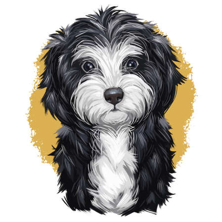 Cavoodle or crossbreed dog, offspring of Poodle and Cavalier King Charles Spaniel. Red Toy Cavoodle Puppy hand drawn portrait. Cavapoo digital art illustration cute canine animal of black and white