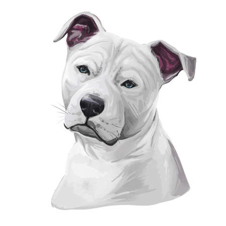 Staffordshire Bull Terrier Staffie, breed of short-haired, white color dog. Digital art. Animal watercolor portrait closeup isolated muzzle of pet, canine hand drawn clipart, animalistic drawing. Stock fotó