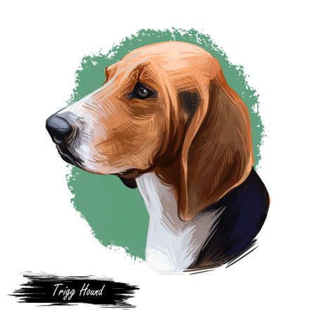 Trigg Hound Puppy isolated digital art illustration. Hand drawn dog muzzle portrait, puppy cute pet. Dog breeds originating from United States. American English Foxhound, bred to hunt foxes by scent Stockfoto