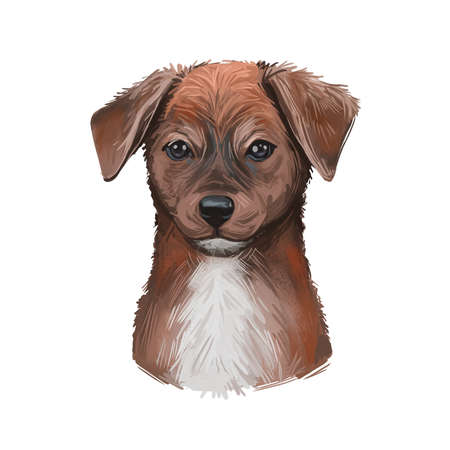 Mountain Cur Dog isolated digital art illustration. Hand drawn dog muzzle portrait, puppy cute pet, working dog bred for treeing, trailing game. Dog breeds originating from United States