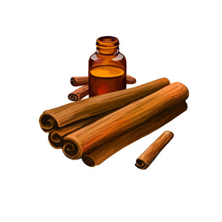Cinnamon dry sticks and bottle with remedy isolated digital art illustration. Dried bark strips, bark powder in glass bottle, Cinnamomum verum. Spicy food condiment, herb with adverse effect. Stok Fotoğraf