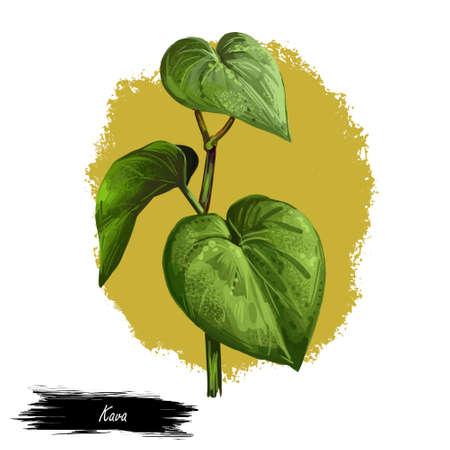Kava isolated digital art illustration. Kava-kava pepper crop, green bitter leaves. awa or ava, yaqona sakau, seka and malok or malogu. . Herb with adverse effect, medical remedy plant handdrawn