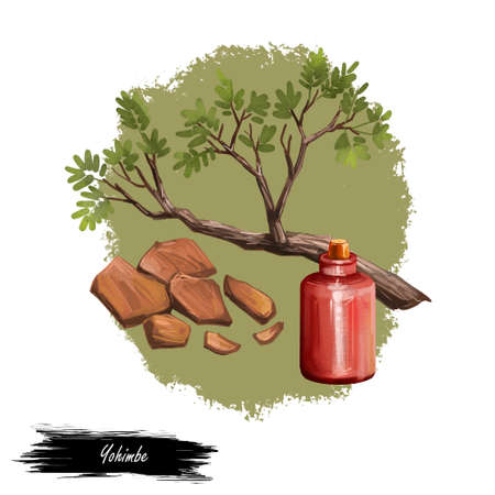 Yohimbe isolated digital art illustration. Pausinystalia bottle, branch dry bark. Extracts yohimbe used in traditional medicine as aphrodisiac, dietary supplement. Herb with adverse effect, remedy
