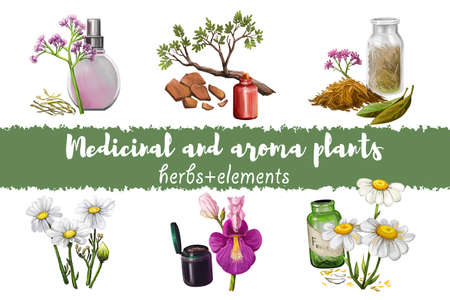 Valerian flowering plant fresh and dry and perfume bottle, Yohimbe branch bark and Cinchona tree bark, Feverfew or Chamomile or camomile daisy plant, Devil's Claw mojave digital art illustrations