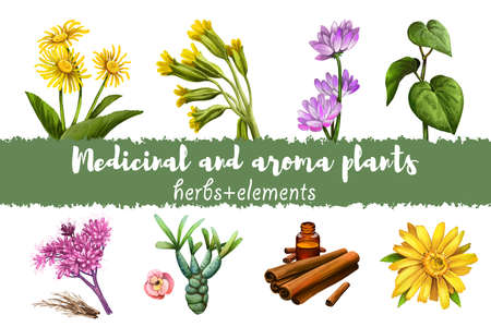 Elecampane and Cowslip, Milkvetch and kava kava, Gravel root and Euphorbia, Cinnamon dry sticks and bottle with remedy and Arnica yellow flower isolated digital art illustration. Tree bark and plants