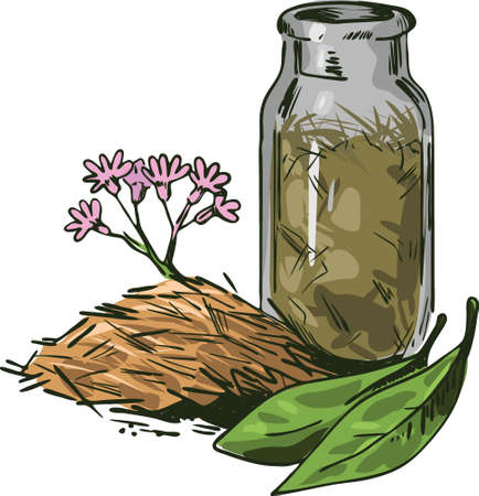 Cinchona bark vector illustration. Blooming flowers and green leaves, bottle withdry herbs. Jesuits Bark, cinchona Peruvian Bark, China Bark, specific remedy for all forms of malaria, quinine