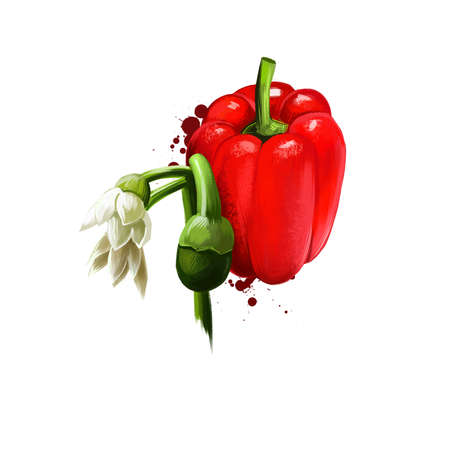 Pimento or Cherry pepper isolated on white background. Organic healthy food. Red vegetable. Hand drawn plant closeup. Clip art illustration. Graphic design element. Digital illustration hand drawn Stockfoto
