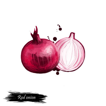 Red onion or Purple skin onion isolated on white background. Organic healthy food. Red vegetable. Hand drawn plant closeup. Clip art illustration with paint splash. Graphic design element. Digital art Stockfoto