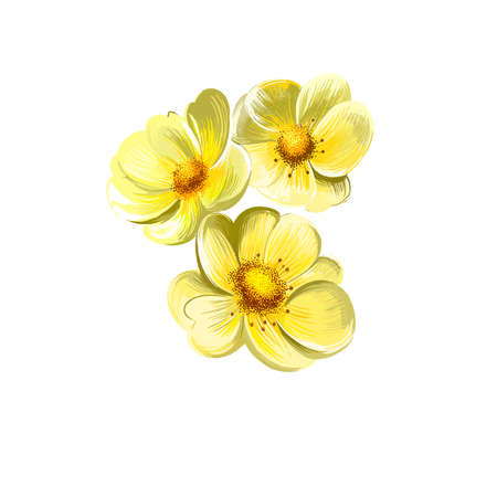 Yellow rose isolated on white. Floral background. Romantic wallpapers. Wallpaper design. Family Rosaceae. Elegantsummer flower. Fashionable plant. Greeting card design. Postcard