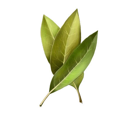 Bay leaves isolated on white background. Dry bay leaf. Dried laurel bay leaves in bundle. Herbs spices. Healthy food natural organic plant. Series of ingredients for cooking. Digital art Фото со стока