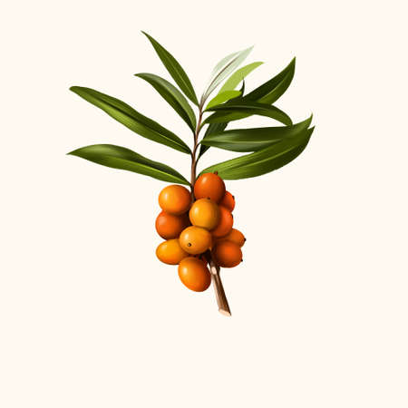 Hippophae fruit isolated on white. Hippophae genus of sea buckthorns, deciduous shrubs in the family Elaeagnaceae. Sandthorn, Sallowthorn, or seaberry. Digital art watercolor illustration Фото со стока