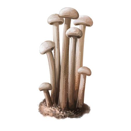 Enokitake flammulina velutipes mushroom, Japan Enoki. Golden needle futu or lily mushroom. Futu, seafood winter fungus, velvet foot stem shank. Digital art illustration, natural food autumn harvest Reklamní fotografie - 157943427