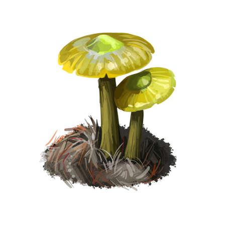 Gliophorus psittacinus Parrot Toadstool or Waxcap, colorful member of genus Gliophorus, found across Europe. Edible fungus isolated on white. Digital art illustration, natural food autumn harvest Reklamní fotografie