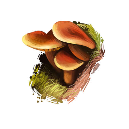 Lactarius pallidus or pale milkcap mushroom closeup digital art illustration. Fungi have pale flesh color and it edible. Mushrooming season, plant of gathering plants growing in woods and forests Reklamní fotografie