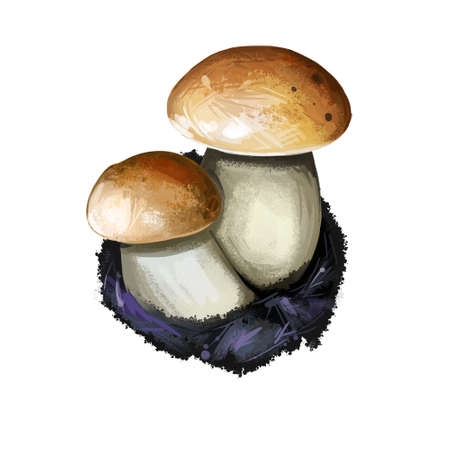 Leccinellum corsicum mushroom closeup digital art illustration. Fungi has wet smooth cap light brown colored and white body. Mushrooming season, plant of gathering plants growing in woods and forests. Reklamní fotografie