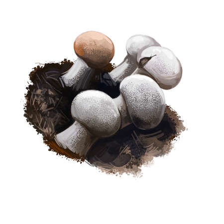 Onygena equina or horn stalkball mushroom closeup digital art illustration. Fruit bodies have spherical, flattened head and whitish cap. Mushrooming season, plant of gathering plants growing in forest Reklamní fotografie - 164794116