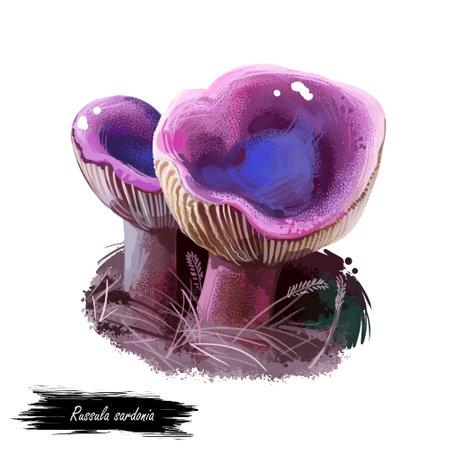 Russula sardonia or primrose brittlegill mushroom closeup digital art illustration. Boletus has violet cap that depressed in center. Mushrooming season, plant of gathering plants growing in forests Reklamní fotografie