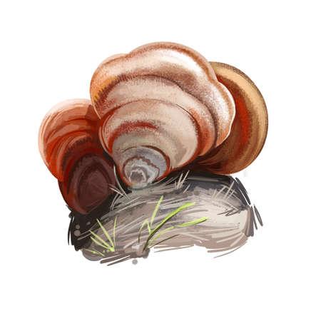 Stereum ostrea, false turkey tail or golden curtain crust mushroom closeup digital art illustration. Boletus has rusty colored body and grows on trees. Mushrooming season, plants growing in forests