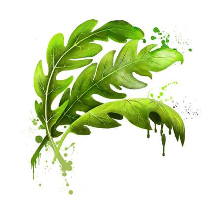 Arugula icon. Eruca sativa. Annual plant known as salad rocket, rucola rucoli rugula colewort roquette, and arugula. Plant of the Brassicaceae family. Garden rocket, rocket and eruca. Digital art