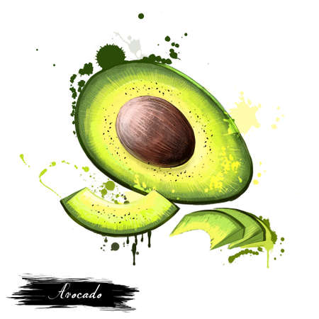 Avocado hand drawn watercolor painting. Persea americana. Flowering plant family Lauraceae. Avocado or alligator pear is fruit, botanically large berry that contains a single seed. Digital art