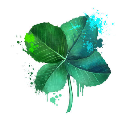 Clover or trefoil isolated. Genus Trifolium plant in the leguminous pea family Fabaceae. Evergreen clover. Melilotus or sweet clover. Medicago alfalfa or cavalry clover. Herbs and spices. Digital art