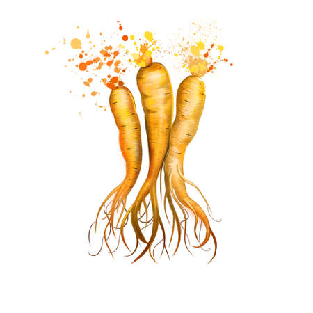 Ginseng isolated. Ginseng slow-growing perennial plants with fleshy roots, belonging to the genus Panax of the family Araliaceae. Herbs spices. Healthy food natural organic plant. Digital art Reklamní fotografie