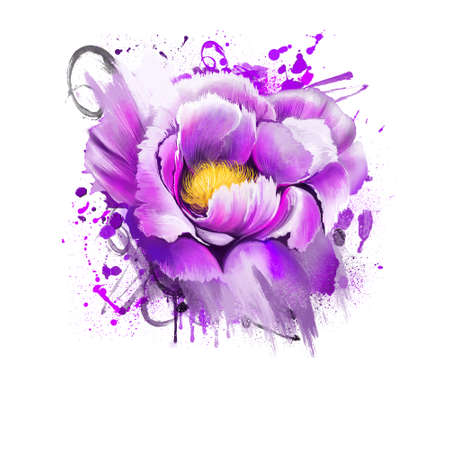 Peony flower. Paeonia suffruticosa isolated on white background. Important symbol of Chinese culture. Moutan or Chinese tree peony. Species of peony digital art illustration print, floral painting