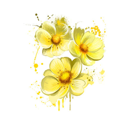 Yellow rose isolated on white. Floral background. Romantic wallpapers. Wallpaper design. Family Rosaceae. Elegantsummer flower plant. Greeting card design. Clip art digital art illustration print