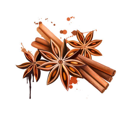 Anise star and vanilla sticks illustration isolated on white background. Hand drawn sketch. Series of ingredients for cooking. Herb spices. Aromatherapy. Natural cosmetics. Close Up star anise seeds. Reklamní fotografie