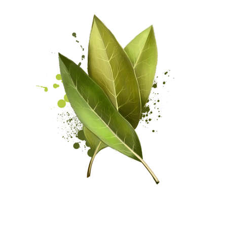 Bay leaves isolated on white background. Dry bay leaf. Dried laurel bay leaves in bundle. Herbs spices. Healthy food natural organic plant. Series of ingredients for cooking. Digital art Reklamní fotografie