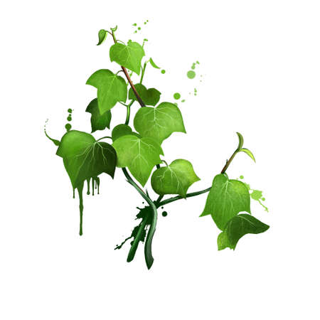 Green ivy sprig isolated on white background. Hand drawn Araliaceae family plant. Bright colors design, realistic volume look. Greeting card design. Clip art. Add your text. Digital art.