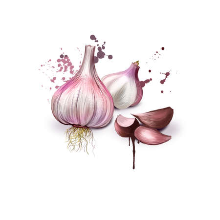 Garlic isolated on white. Vegetable from the garden. Organic food. Garlic and garlic bulb. Fresh whole garlic, tree cloves. Bright colors design, realistic volume look. Clip art. Add text. Digital