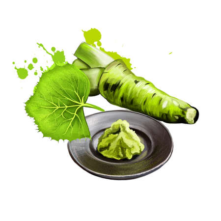 Fresh wasabi root, raw wasabi for japanese food. Japanese horseradish, condiment for sushi, sashimi on the plate isolate on white. Strong pungency. Herbs and spices collection. Digital art. Reklamní fotografie