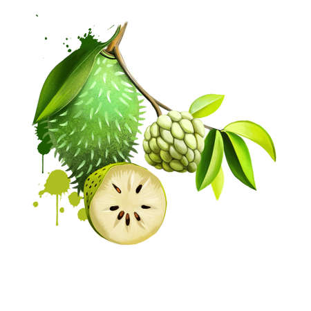 Custard apple fruit, Annona squamosa. Annona species are taprooted, evergreen or semideciduous, tropical trees or shrubs. Guanabana, Graviola and Soursop. Fruits of the world collection. Digital art Reklamní fotografie