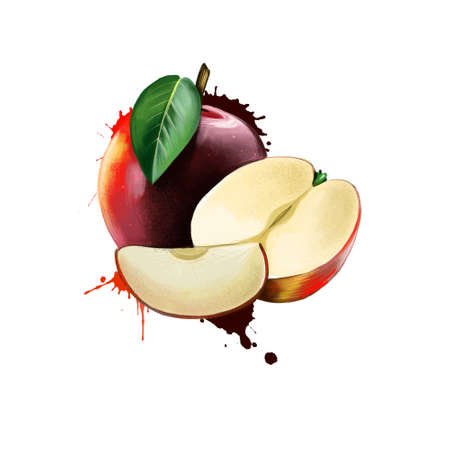 Red apple on white background. Half of apple and slice. Apple tree Malus pumila deciduous tree in the rose family best known for its sweet, pomaceous fruit. Fruits of the world collection. Digital art