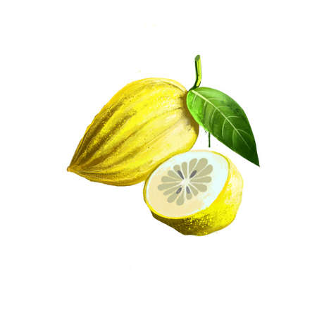 Citron isolated on white. Citron large fragrant citrus fruit with thick rind, botanically classified Citrus medica, half of citrus, slices. Used for culinary purposes. Fruits collection. Digital art. Reklamní fotografie