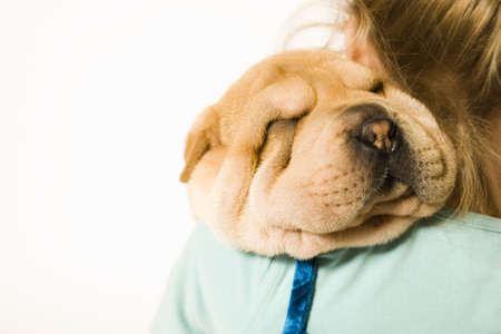 Young girl holding a pup on her shoulder sleeping Stock Photo