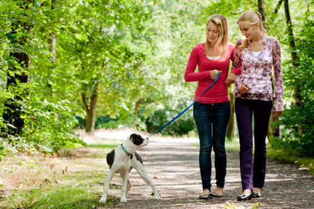 Two blond girls and a american bulldog in the park