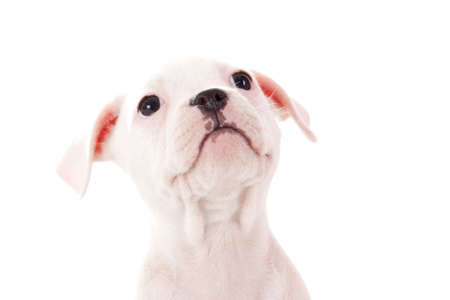 Crossbreed cute puppy in a studio having a great time Stock Photo - 19185017