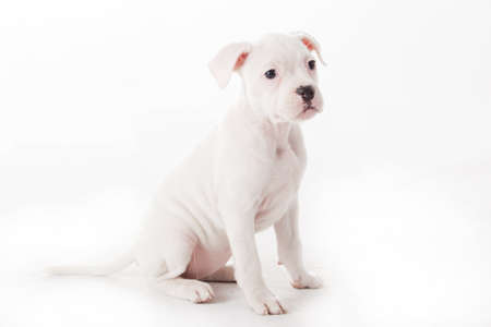 Crossbreed cute puppy in a studio having a great time Stock Photo - 19185018