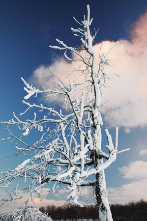 snappy: A very frozen and iced over tree