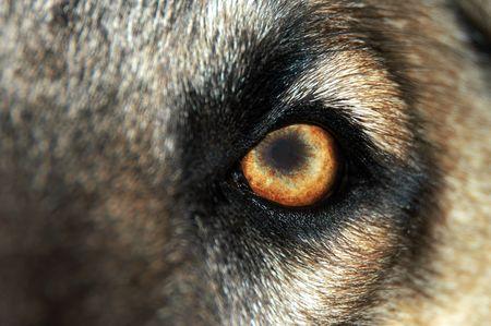 강아지의 눈의 매크로 샷