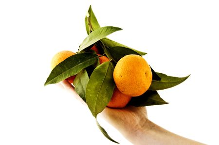 sweet segments: An isolated to white image of a bunch of oranges held in hands Stock Photo
