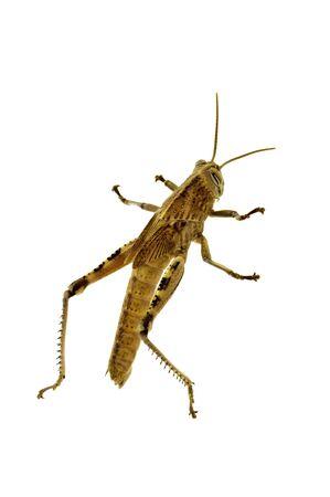 locust: A macro photo of a grasshopper climbing